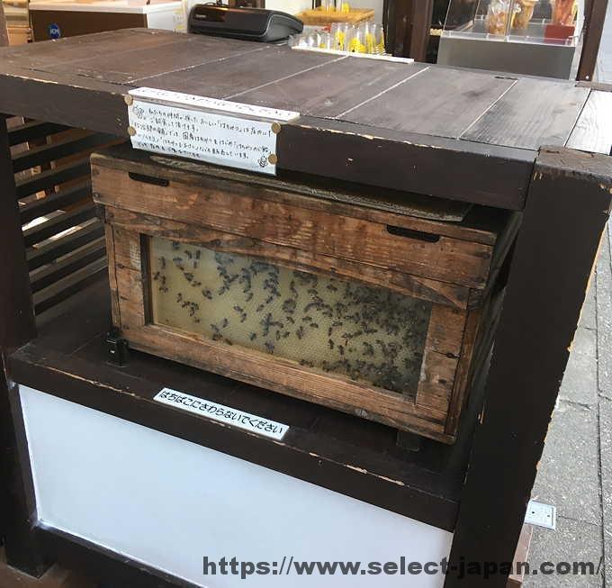 松治郎の舗 はちみつ 蜂 巣箱