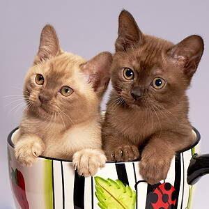猫用トイレ 管理アプリ 腎不全 対策