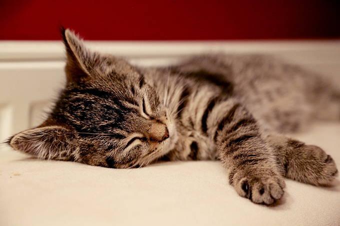 猫用トイレ 腎不全 管理アプリ