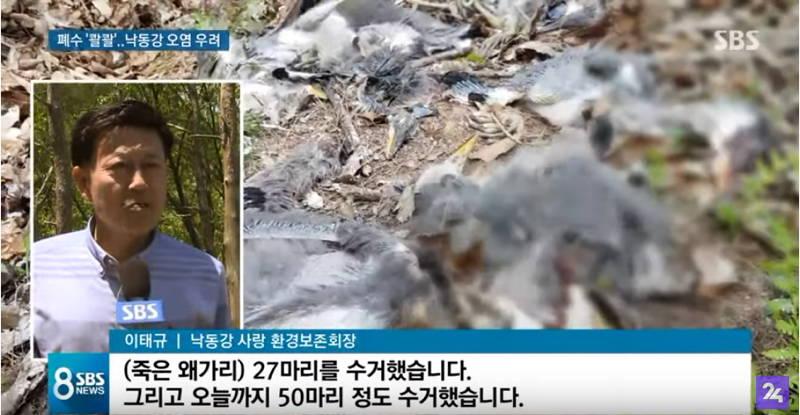 韓国 カドミウム 汚染 石浦亜鉛精錬所 鳥