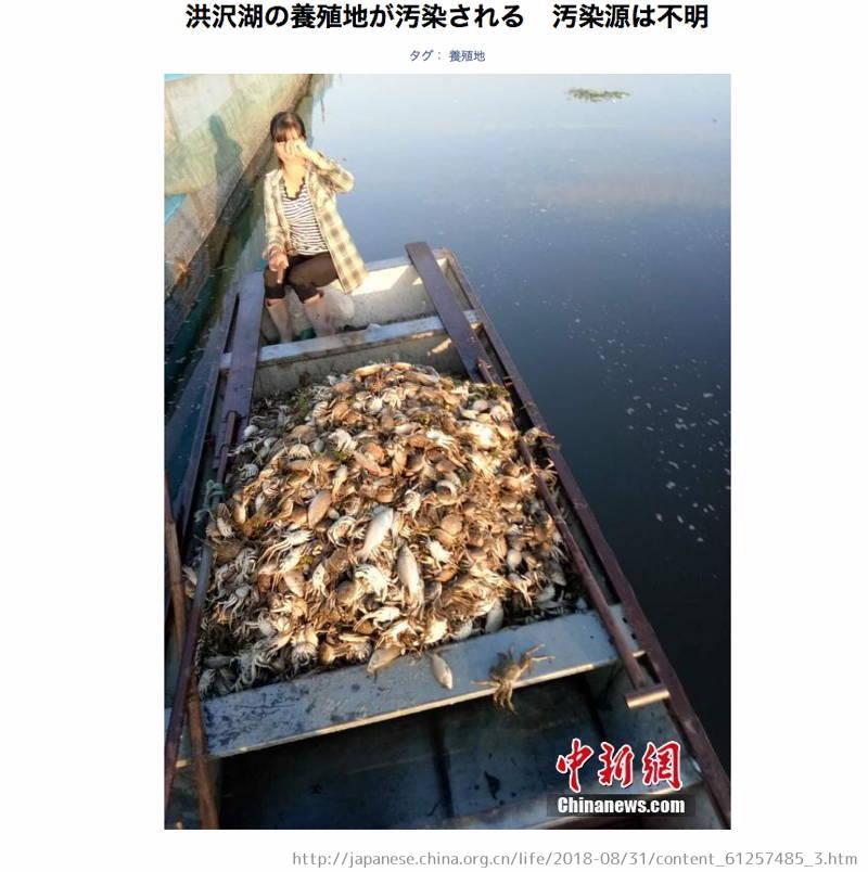 洪沢湖 しじみ 輸入 中国産 汚染 大量死 上海カニ 魚 原因不明 汚水